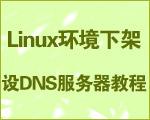Linux环境下架设DNS服务器教程